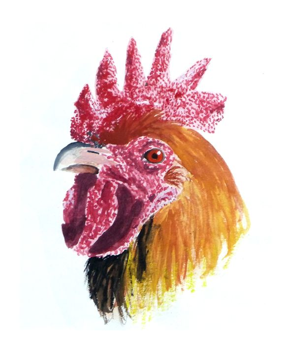 Rooster Portrait - Karin Wilds