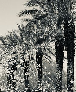 Palm Froth