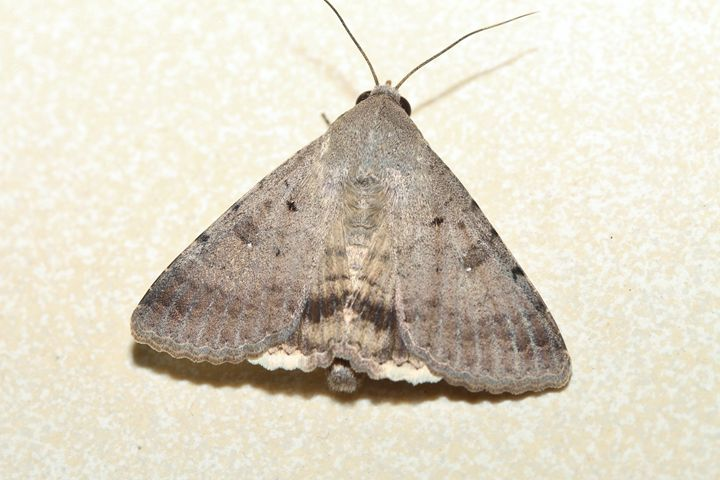 Moth - Alvin Wong Photography Gallery