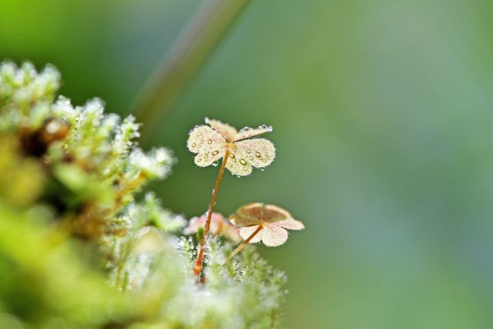 Plant and water droplet - Alvin Wong Photography Gallery