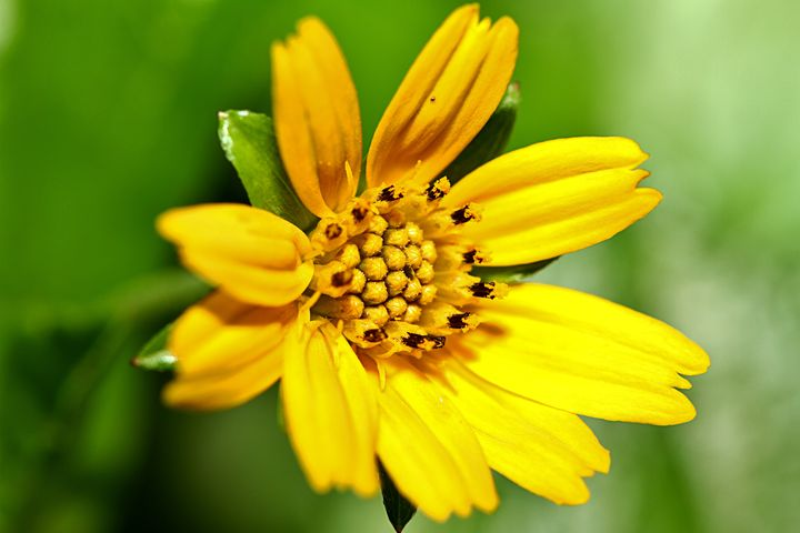Yellow flower - Alvin Wong Photography Gallery