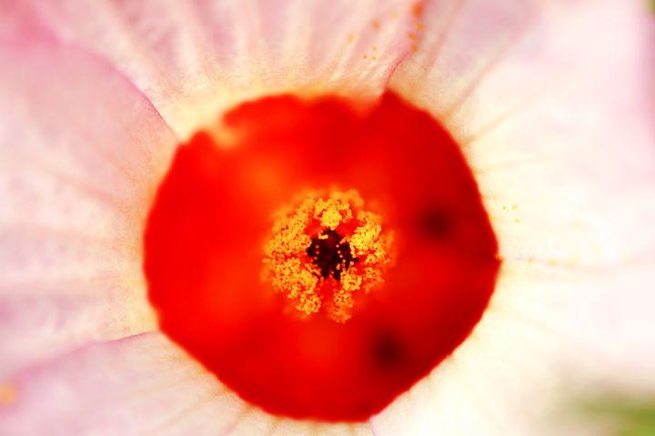 Pollen grains of flower - Alvin Wong Photography Gallery