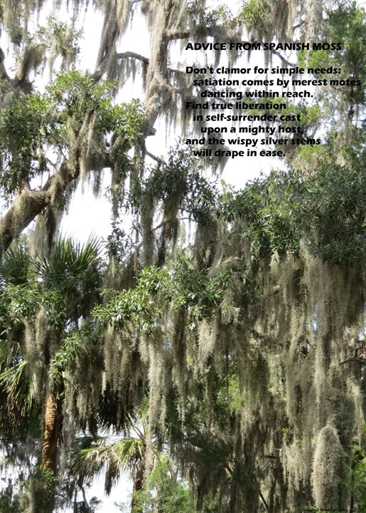 Advice From Spanish Moss - Coastal Poetography