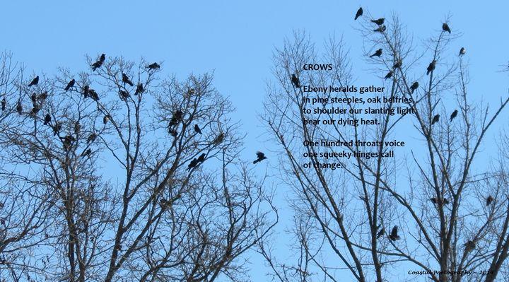 Crows - Coastal Poetography