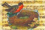 art print robin in her nest