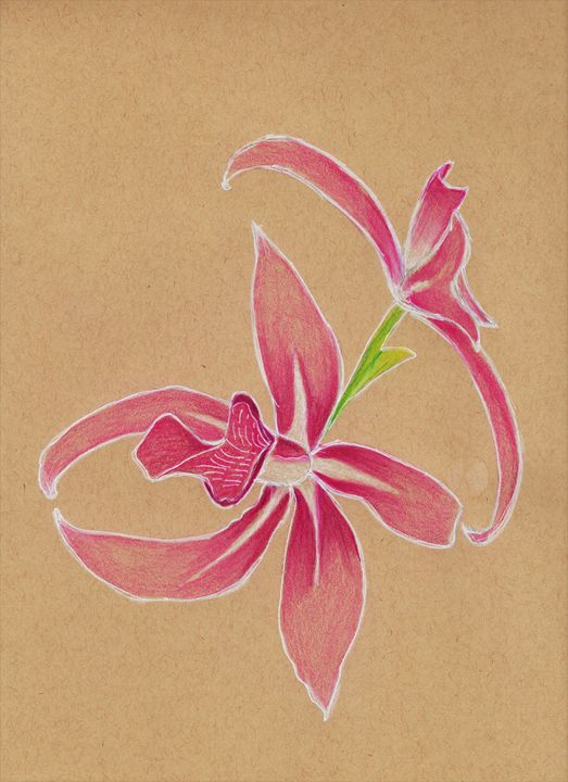Orchid in bloom - The Crafty Artist