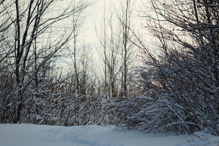 Winter Landscape - 50m30n3-3153