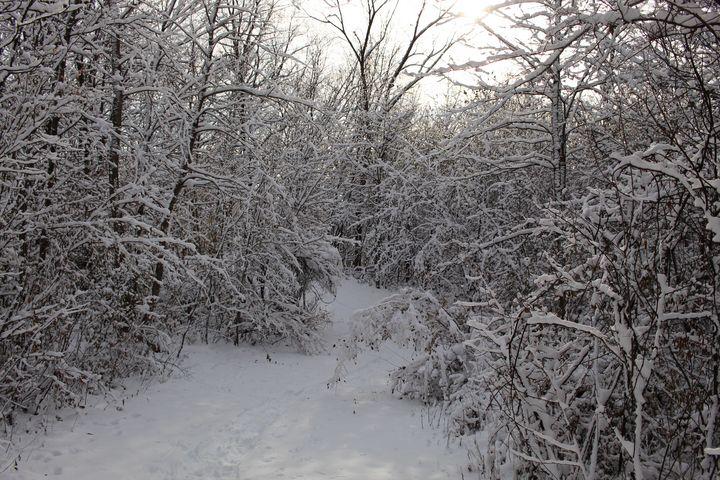 Snowy Winter Landscape 2 - 50m30n3-3153