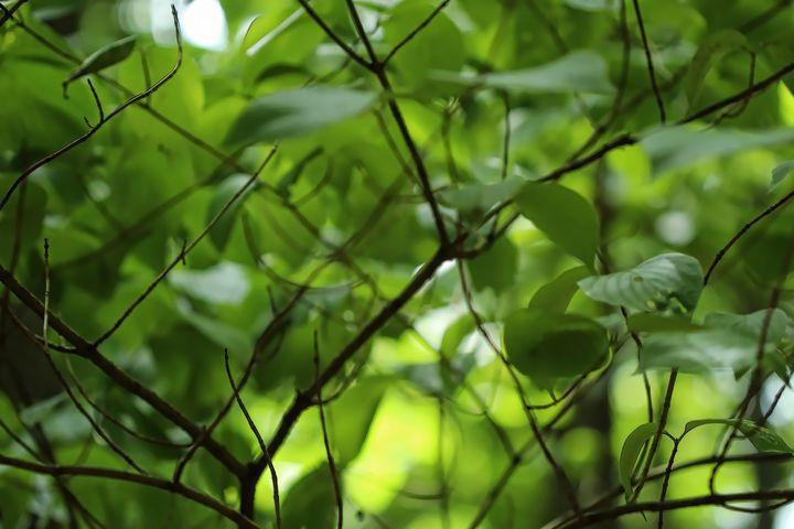 Green Leaves 7389 - 50m30n3-3153