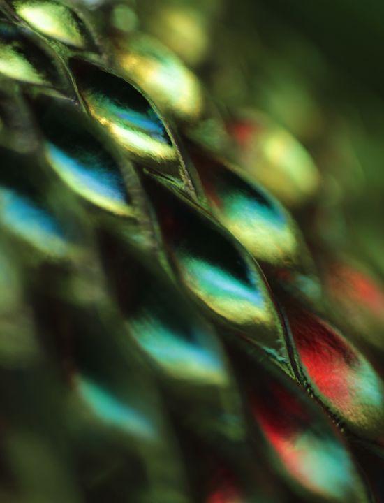 Peacock Jewels 2 - 50m30n3-3153