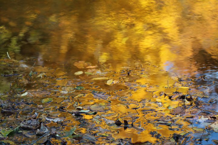 Gold and Blue Water with Leaves - 50m30n3-3153