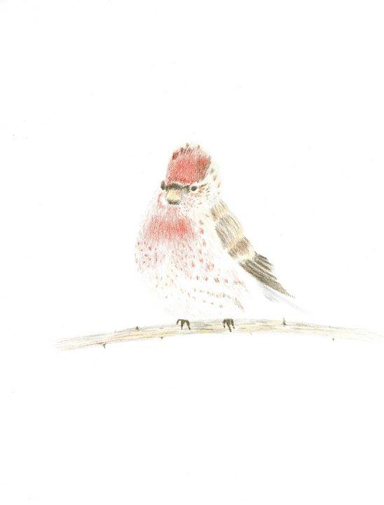 Bird Drawing - Martine Hébert
