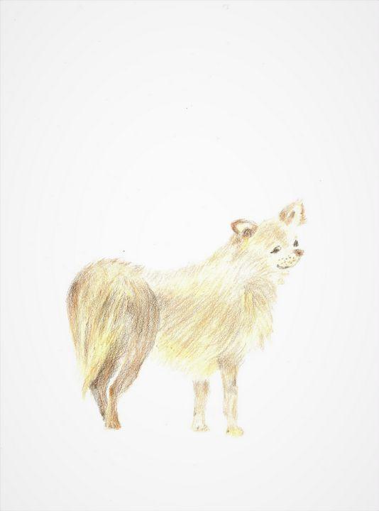 Dog Drawing - Martine Hébert