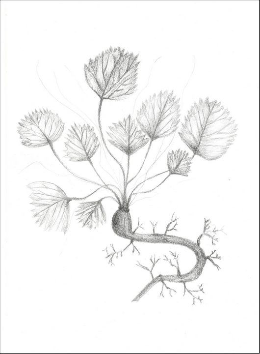 Végétation Drawing - Martine Hébert