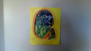 Colorful Bird - Artistic7Hidden@Best