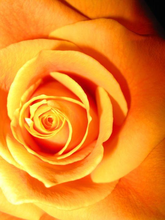 Rose of Fire - The World Thru My EyeZ