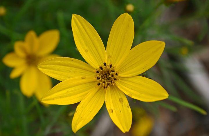 Yellow flower bloom - The World Thru My EyeZ
