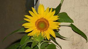 Centered Sunflower
