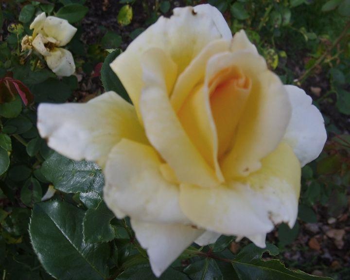 Golden Bloom - The World Thru My EyeZ