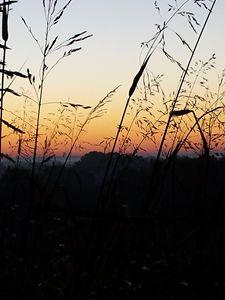 sunrise & grass