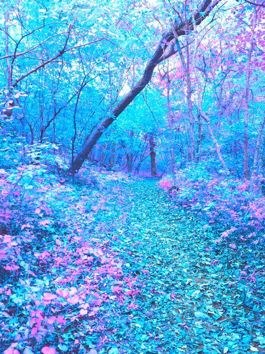 Wonderland - Josh James