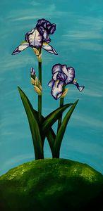 Iris Heritage