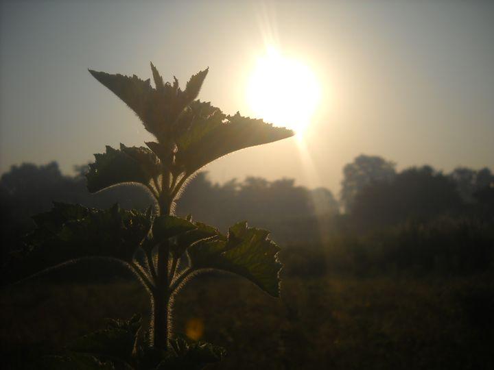 good morning - My photoGraphy