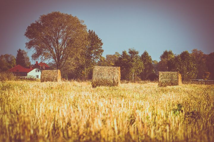 Agricultural fields with a haystacks - Tartalja