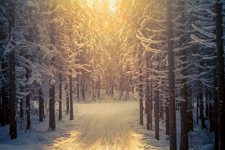 Forest ski-track - Tartalja
