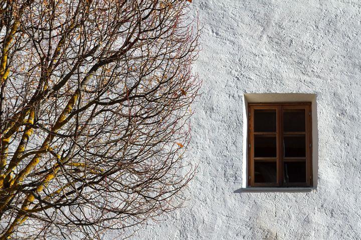 Autumn tree and a window. - Tartalja