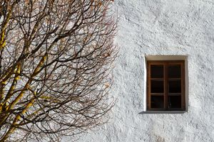 Autumn tree and a window.