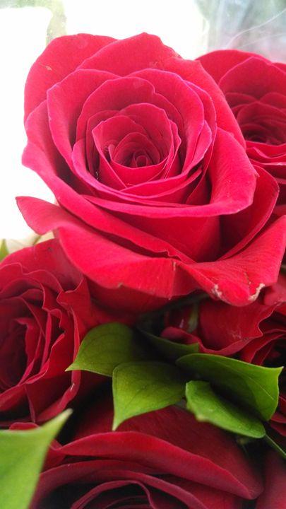 Red rose - Inkonthepaige