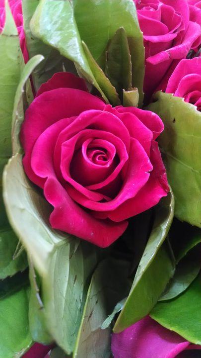 Rose - Inkonthepaige