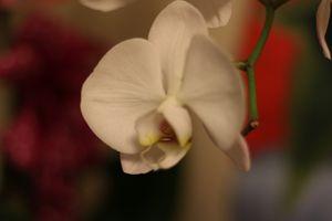 Orchid Flower - MarilynTye