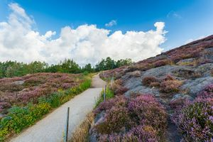 Pink and purple heather