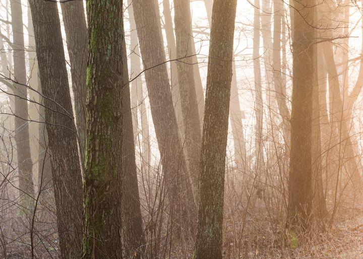 Fog and misty morning - joisbalu