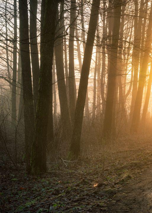 Golden woodland - joisbalu