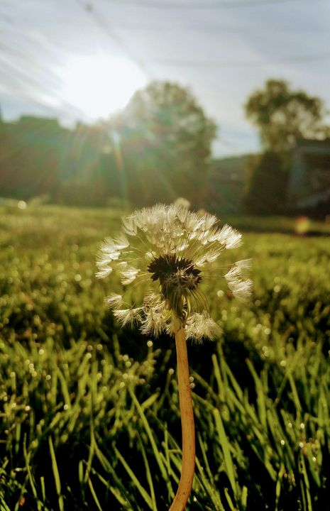 Early morning - God's Splendor