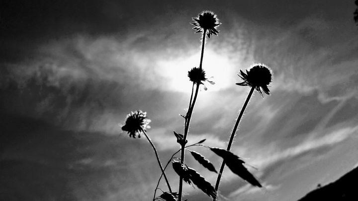 Afternoon revelation - God's Splendor
