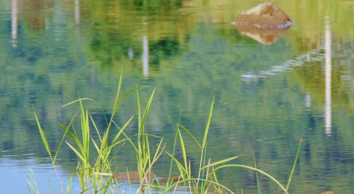 By the water - God's Splendor