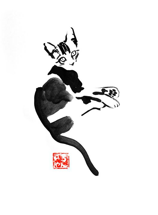 young cat - pechanesumie