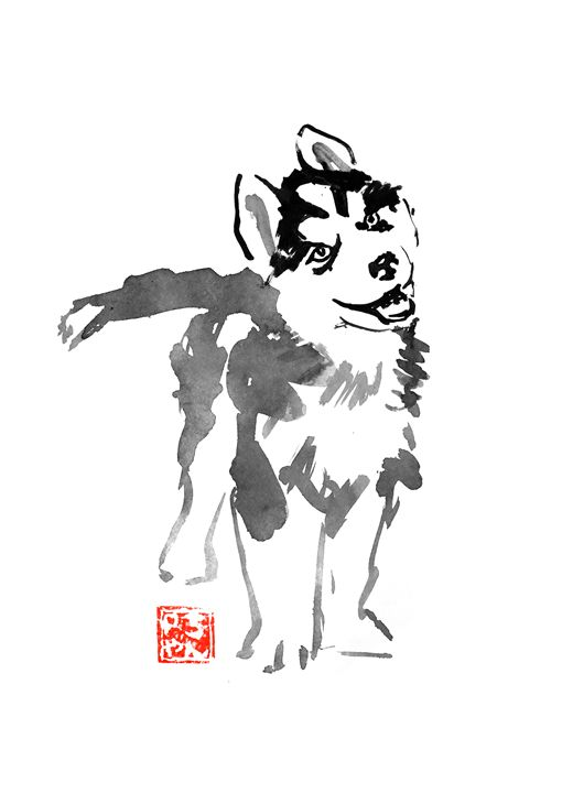 standing young husky - pechanesumie