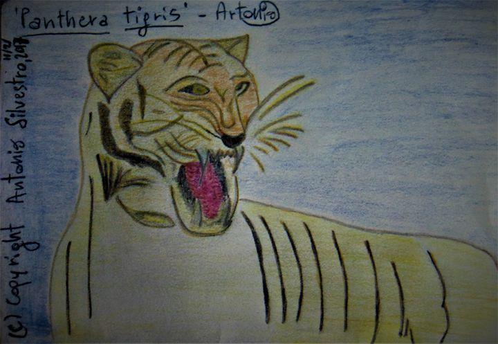 Panthera tigris - Artonio