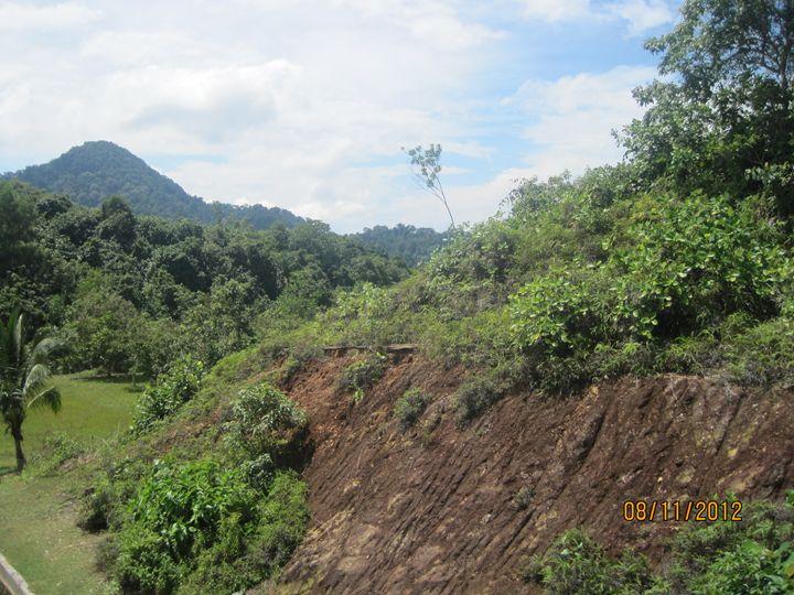 Mount - HoneySugarQuill