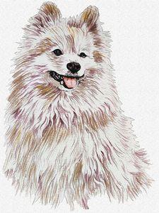 Cancer Sign — Pomeranian