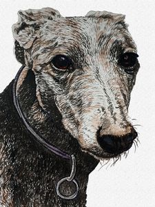 Libra  Sign— Greyhound