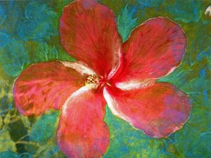 Bermudian Hibiscus