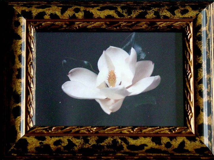 """Savannah Magnolia"" Framed Photo - Painted Pickle Art"