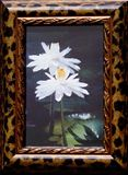 """6"""" x 8"""" lily photo framed"""