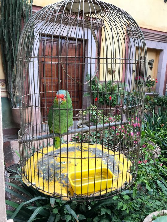 The parrot in the cage - Lovely Nature